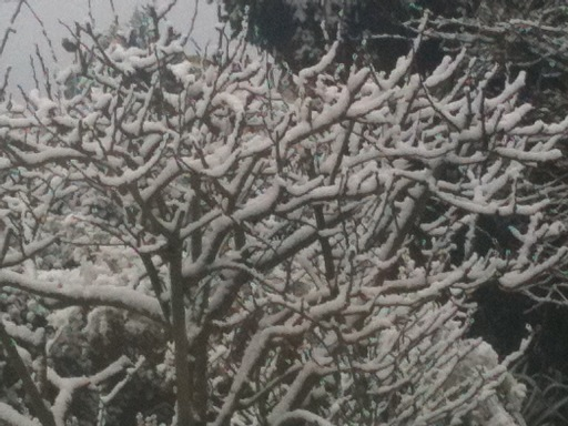 Snow Branches Action Motivation Consciousness