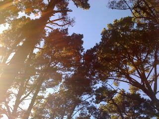 Berkeley Sun Trees Life Light Manifestation