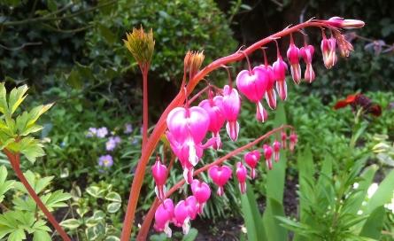 Spring Flower Mix Heart Shape Flowers