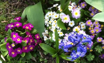 Spring Flower Gargen Mix