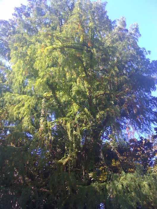 Rio De La Plata Delta Tigre Tree Moss