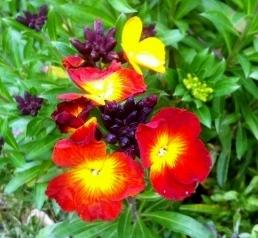 Spring Fire Orange Flower